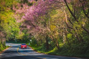 Car driving on road in spring